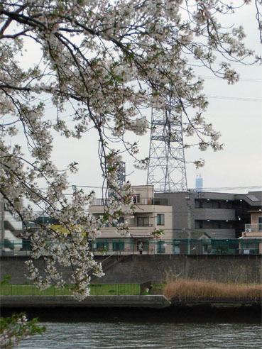 20100404sakuraskytree