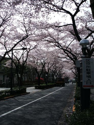 20100407sakura01