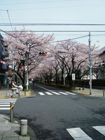 20100407sakura02