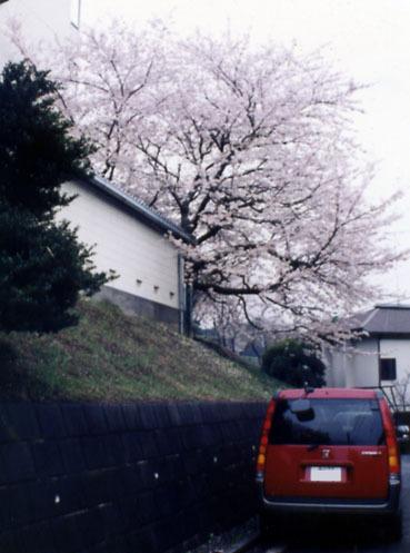 20100412sakura1999_3