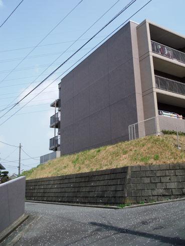 20100412sakura2010_2