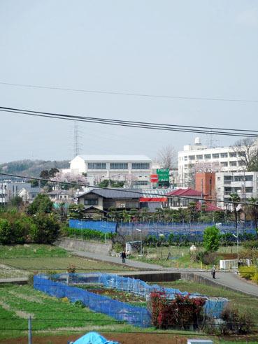 20100413tanashogakukou