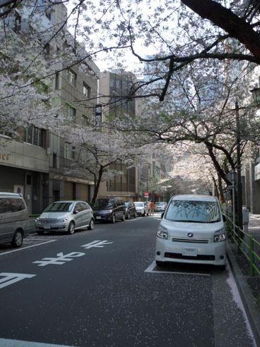 20100411nihonbashisakura02_3