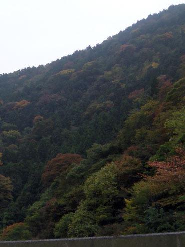 20101118kouyou02