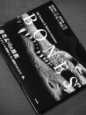 20110314bnestop