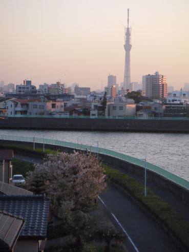 20110414sakura01