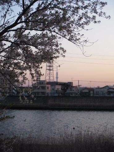 20110414sakura02