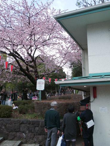 20120325sakura01