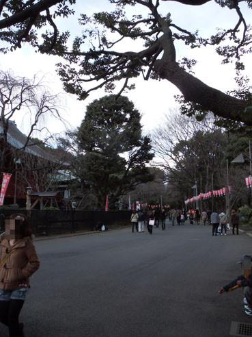 20120325sakura03