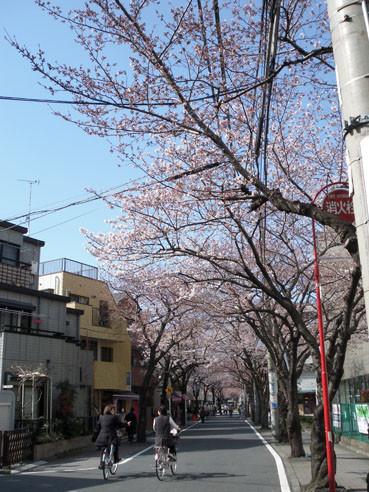 20120405sakura