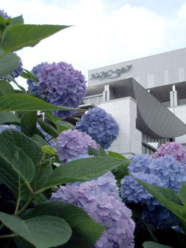 20120610ajisai02