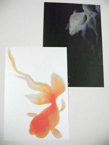 20120726hanemono02card