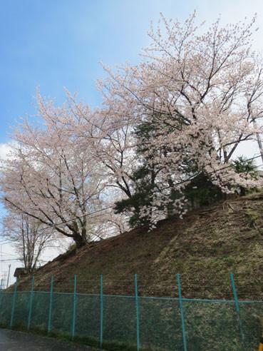20140414sakuraenokigaoka