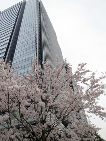 20160406sakura03